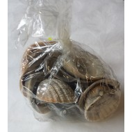 10 Coquillages, naturelles, assortiment petits, moyens et grands