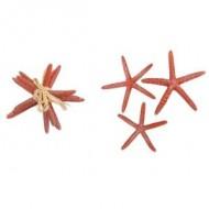Set de 3 étoiles de mer résine orange 13 x 1,5 cm