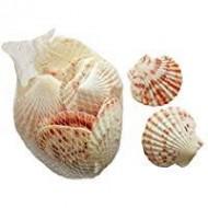 Filet 150 gr coquillages Saint Jacques