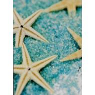 Déco étoile de mer, 6 pièces